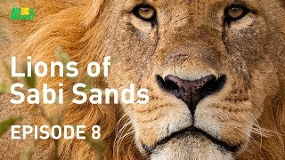 Lions of Sabi Sands - Episode 8 | New King of the West