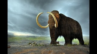 Answers News: Resurrecting Mammoths – September 27, 2018