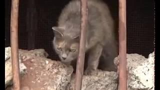 День кошек в Харпе 14 08 2019