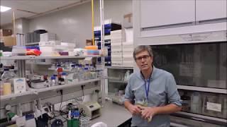 Medicina traslacional para la retina en España: de la investigación a la clínica