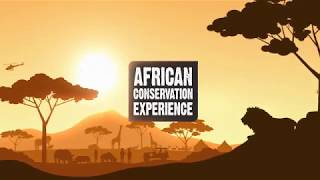 Volunteer with Wildlife in Africa – African Conservation Experience