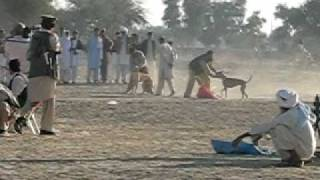 preview picture of video 'Lakki Marwat Dalo Khel Greyhound Dog Race'