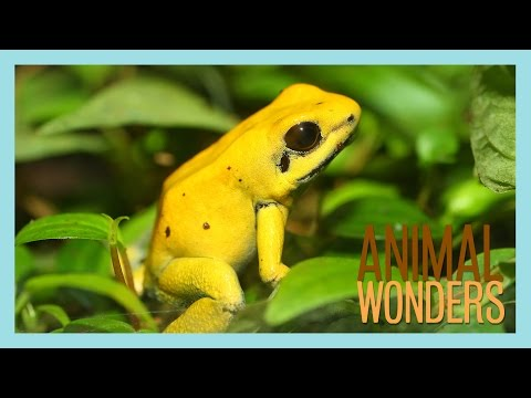 Poisonous Snake and Venomous Frogs?!