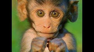 Смешные обезьяны   Лучшая подборка видео приколов с обезьянками #3