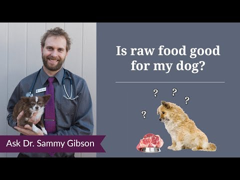 Is Raw Food Good For My Dog?