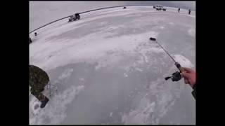Рыбалка на юго западном новосибирск 2020