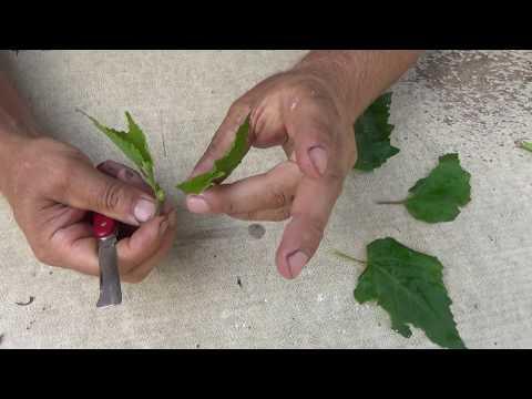Olej arganowy na włosy w Ałmaty