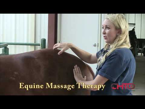 The Five Key Benefits Of Equine Massage Therapy For Your Horse ...