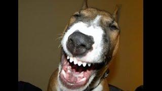 Топ 10 приколов: про смешных собак