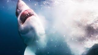Voilà ce qu'il se passe quand une baleine meurt - ZAPPING SAUVAGE