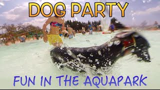 preview picture of video 'AQUAPARK CANINO CAN JANE EN BARCELONA - MASCOTAS AL 100% DE VACACIONES'