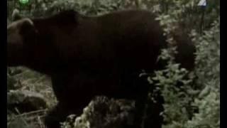 Rozprávka: Pa a Pi - 05 Otužilci v kožuchu (medveď)