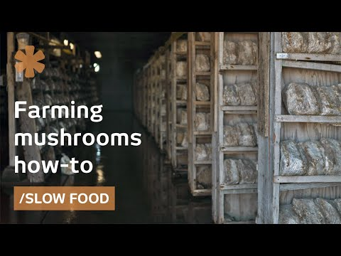 How to farm mushrooms for Slow Food, medicine, bioremediation