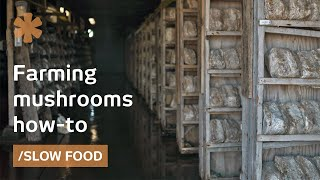 How to farm mushrooms for Slow Food, medicine, bioremediation