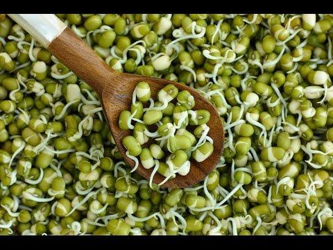 Фасоль маш зеленая как готовить