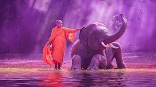 Relaxing Zen Music For Stress Relief | 528Hz Miracle Healing Frequency | Solfeggio Healing Tones