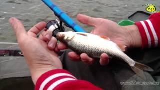 Смотреть онлайн Оснастка и ловля рыбы болонской удочкой на течении