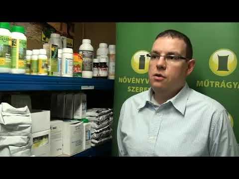 A krónikus prosztatitis felismerése