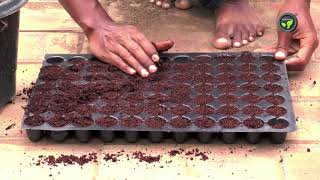 Crops and Varieties for Terrace Gardening  and Nursery Raising
