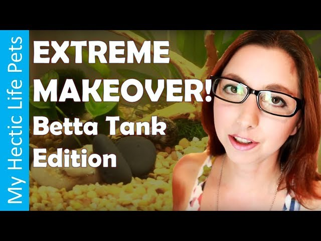 Betta Fish Tank Update