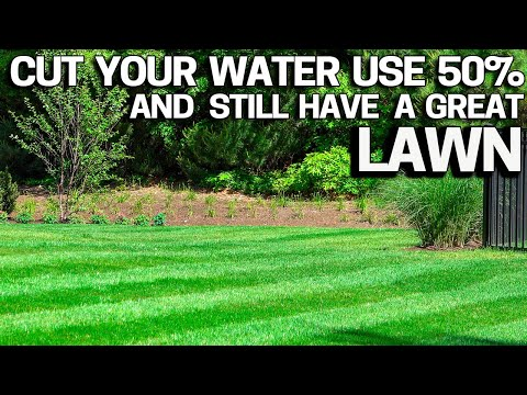 SUMMER LAWN TIPS with Less Water! How Much Water for your Lawn?