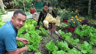 Làm Dưa Cải ăn Tết | 7 Thuận #194