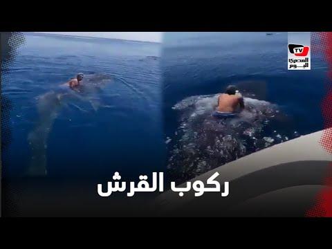انتشار مقطع فيديو لشخص يركب فوق حوت ضخم في البحر الأحمر