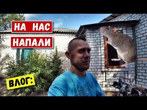 Vlog: Приехал с дальняка, а в моем доме уже живут...