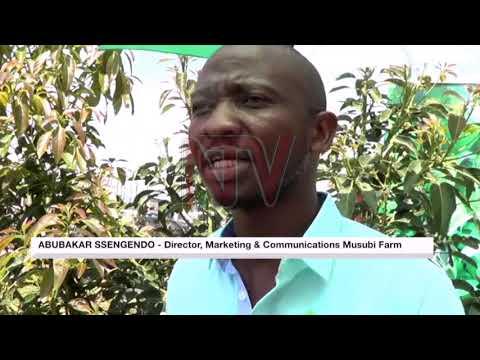 HORTICULTURE EXPORTS: Uganda sets eyes on $7bn global avocado market