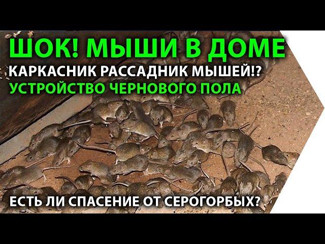 Мыши в каркасном доме. Устройство чернового пола. Защита каркасника от грызунов.