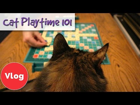 How To Play With Your Cat! Playtime 101 - Play Methods To Ensure Your Cat Gets The Most Out Of It!