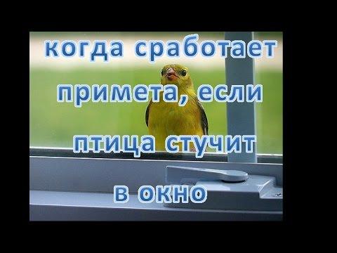 Счастье горшок текст песни