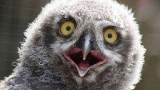 【衝撃】驚いた顔の動物達が面白いwww