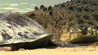 Croc Island Battleground   documentary in english Part 1