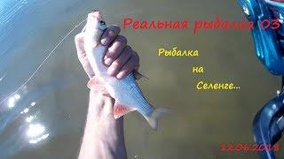Рыбалка на селенге в улан-удэ