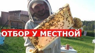 Мёд есть! пчеловодство в Сибири сезон 2018