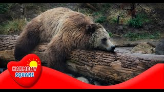 Animal Behavior - More Real World Science on the Learning Videos Channel