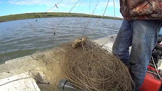 Масштабне браконьєрство на Дністрі біля села Анадоли Хотинського району Чернівецької області