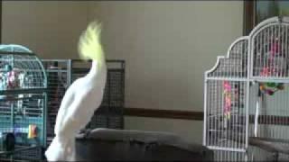 Смотреть онлайн Талантливый попугай интернета