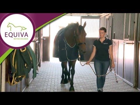 Pferdedecken - zu Besuch bei Horseware in Irland