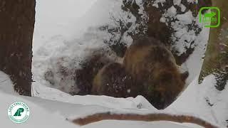 Медведица с медвежонком  #2 Вести из леса 22.02.18