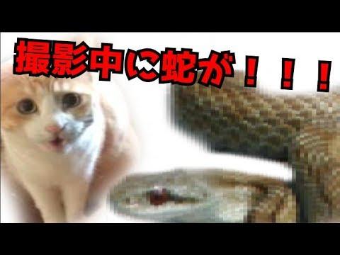 【危険】部屋にヘビが現れて猫達大パニック!そして…【閲覧注意】