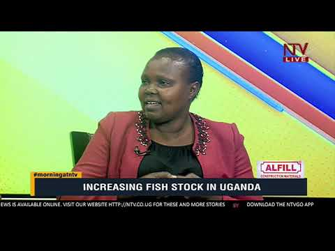 KICKSTARTER: What should be done to increase Fish stocks in Uganda
