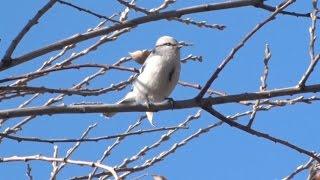 Заповедники Казахстана. Зимующие птицы