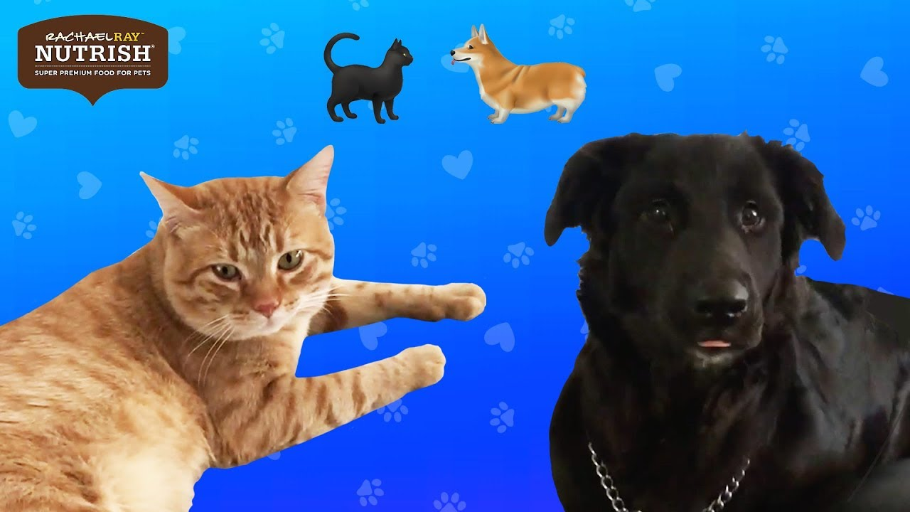 Couples Foster A Dog And A Cat At The Same Time // Presented by Nutrish thumbnail