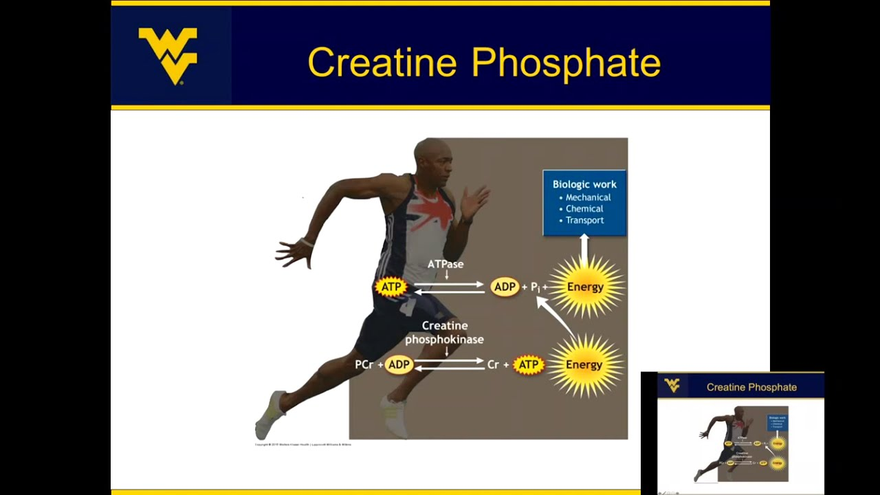 Play Energy Metabolism: Where does energy come from for muscle contraction?