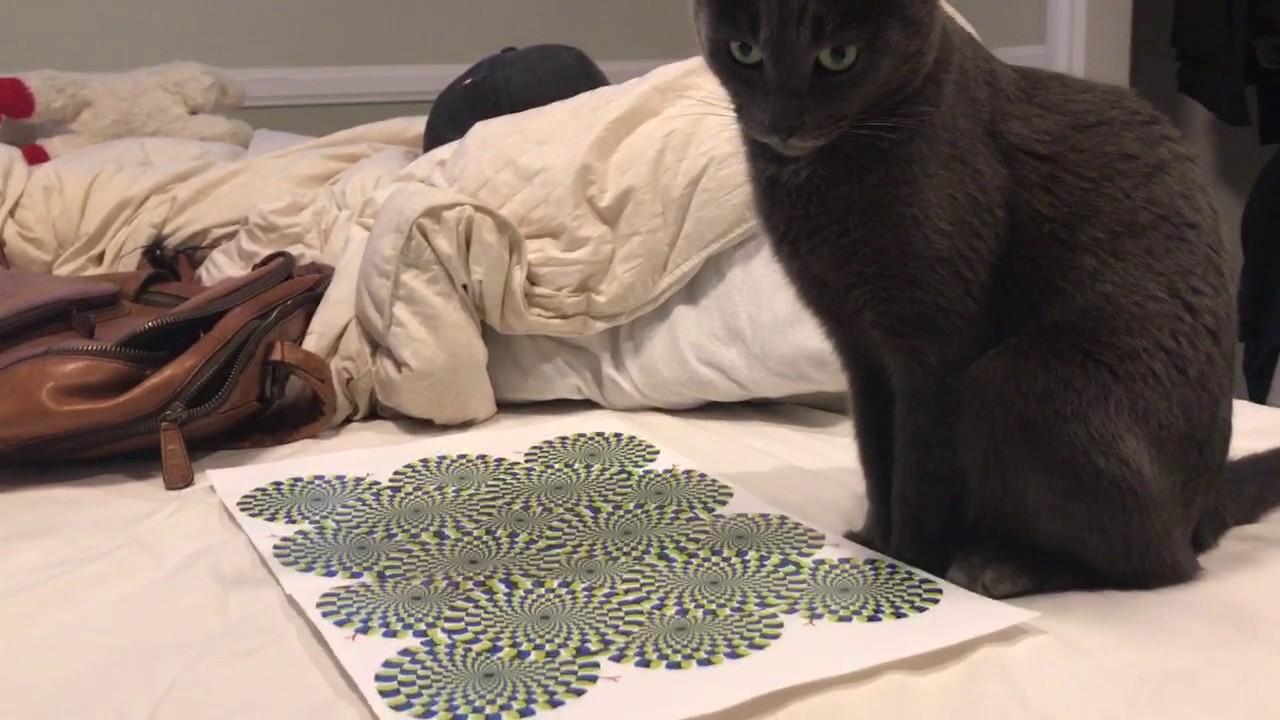 Кот и зрительный обман