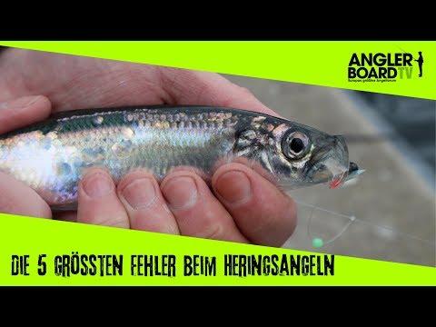 De 5 største fejl ved sildefiskeri