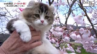 Vol.57「にゃん旅鉄道」さくらと桜のコラボにゃ!