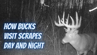 How bucks visit scrapes day and night